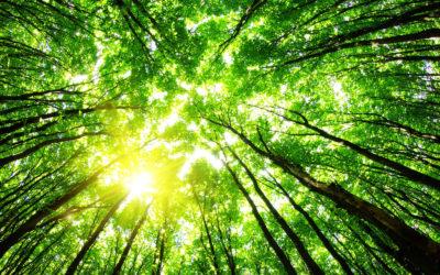 Mit Digitalisierung zu mehr Nachhaltigkeit im Teilnehmermanagement